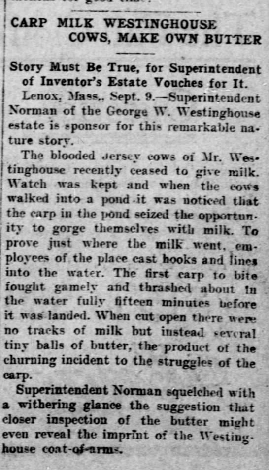 Lenox, Ma. Westinghouse cows feed carp!!  Leavensworth Times 10 Sept 1910